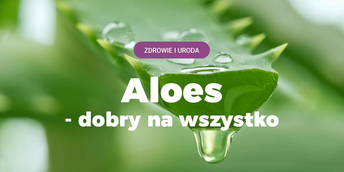 aloes działanie, na co aloes, zastosowanie aloesy, leczniczy sukulent, żel aloesowy